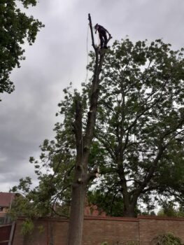 All Aspects Of Tree Care